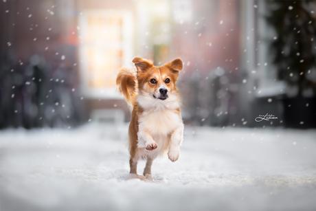 Vrolijk in de sneeuw