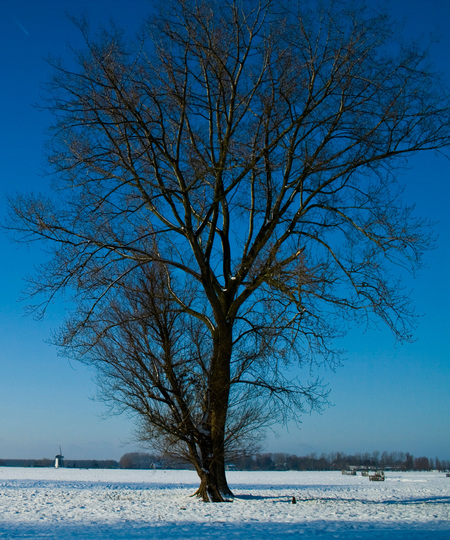 Big old tree. - - - foto door Anne_Timmermans op 13-01-2010