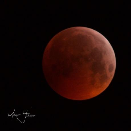 """bloed """" wolf """" maan"""