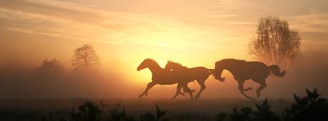 Paarden voor de zon