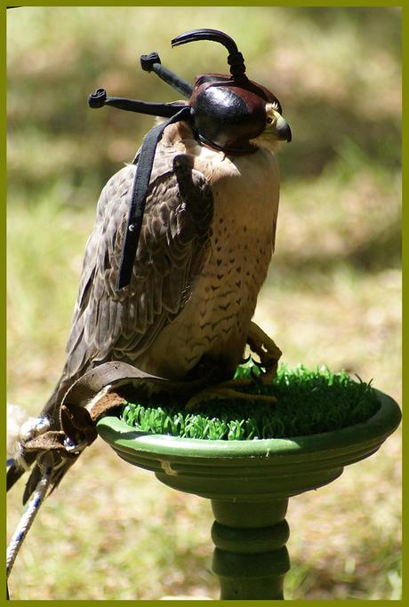 Hi, I'm superbird