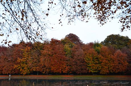 Herfst in Rivierenhof