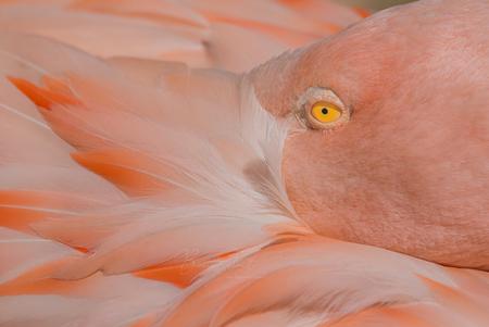 Pink flamingo - - - foto door Bianca Schmidt op 23-02-2021 - deze foto bevat: dierentuin, flamingo, dieren, vogel, watervogel, wildlife