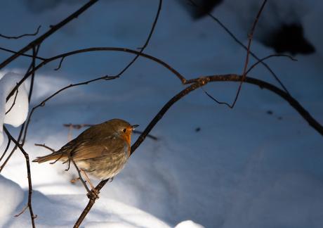Winter landschap 21