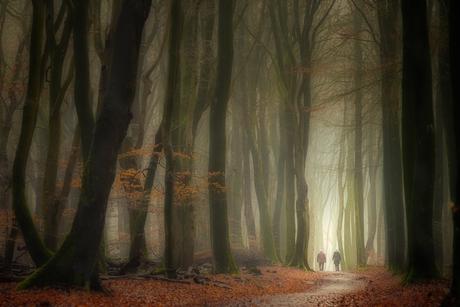 Ochtend wandeling in het Speulderbos.........