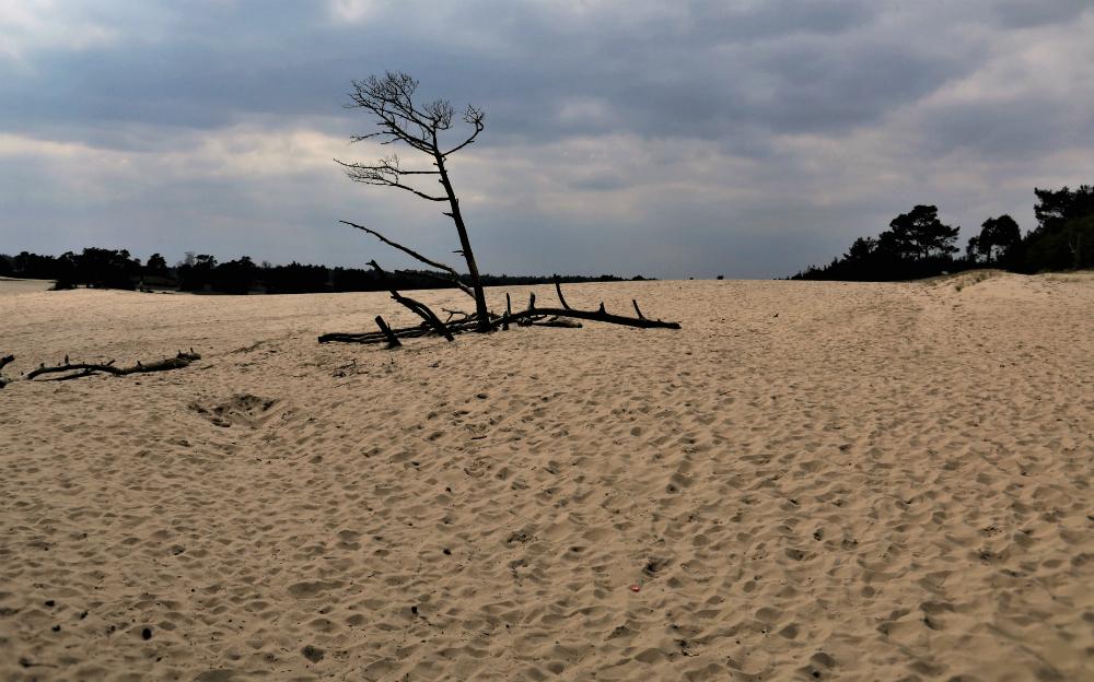 hushosterzand - Hulshosterzand    Prachtige om te wandelen. - foto door majvangooreg op 03-04-2018 - deze foto bevat: zand