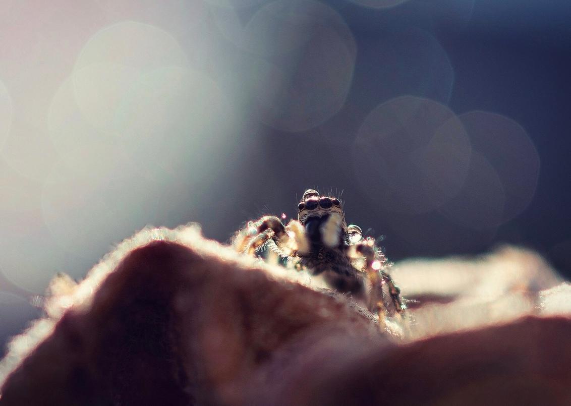Is het voorbij? - Thanks voor jullie reacties en faves op vorige upload zoomvrienden. Ik ben nog steeds bezig met het bekijken van alle mooie foto's die ik gemist heb  - foto door Jodokuscul op 24-03-2021 - deze foto bevat: spin, tegenlicht, dauw, dof, bokeh