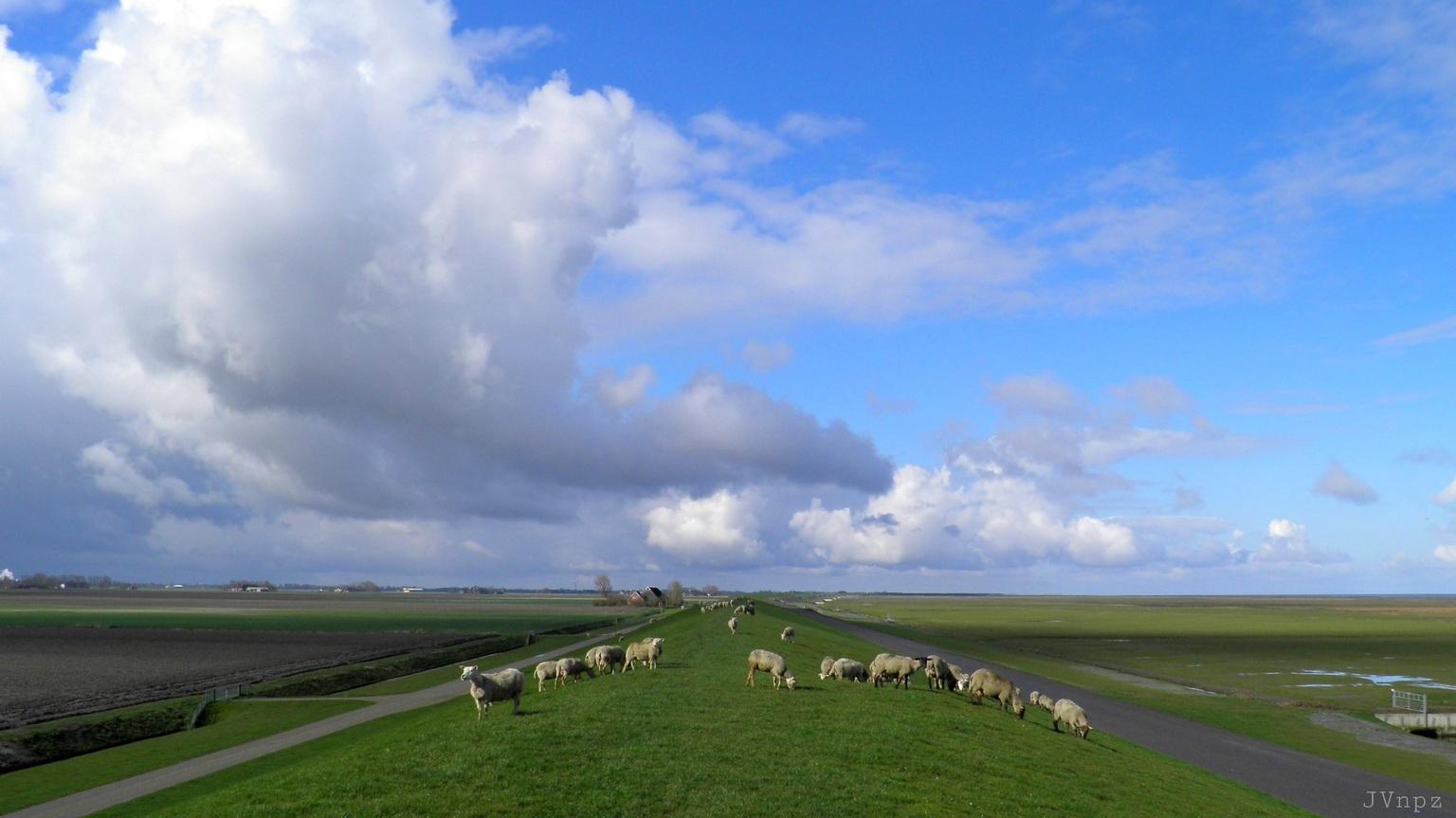 Schaapjes op het droge - Schapen op de dijk te Noordpolderzijl  - foto door Vissernpz op 14-04-2021 - deze foto bevat: schaap, wadden, dijk, kwelder, wolken, wolk, lucht, fabriek, natuurlijk landschap, land veel, hoogland, gras, cumulus, grasland, landbouw