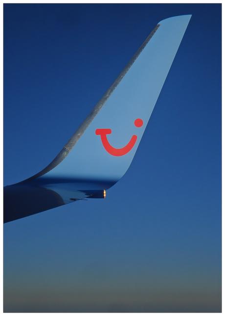 Blue Wingtip