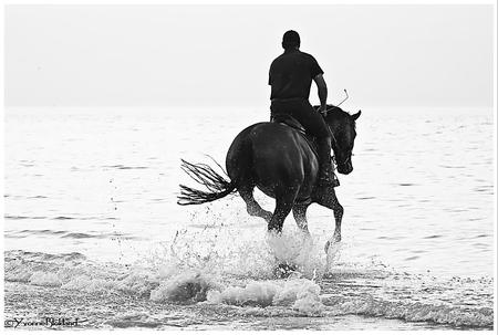man en paard 5333_pe web - - - foto door onne1954 op 09-12-2020
