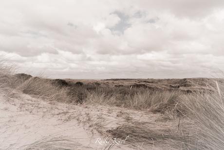 Duin gebied Ameland