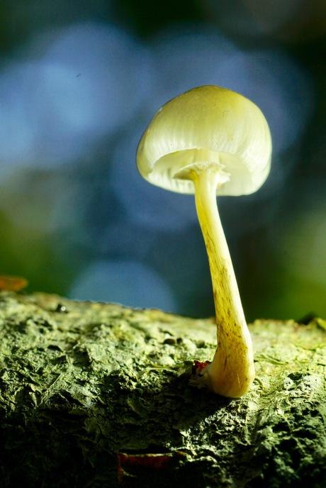 Paddenstoel ge maakt in de bossen in Dorst