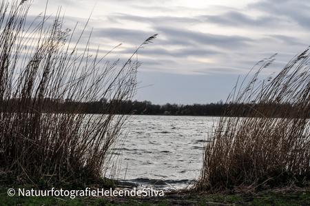 Onstuimig meer - Tijdens een avondwandeling  - foto door HeleendeSilva op 05-05-2021 - locatie: Dobbeplas, 2631 Nootdorp, Nederland - deze foto bevat: water, meer, golven, riet, lucht, water, wolk, lucht, fabriek, afdeling, natuurlijk landschap, hout, meer, takje, lichaam van water