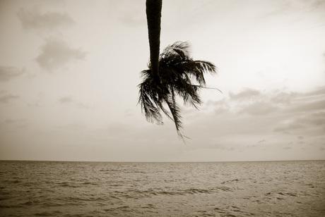 Palm Mui Ne