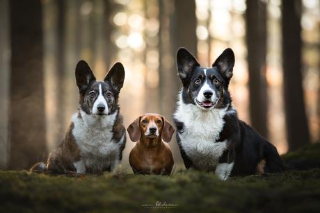 Hester, Plien & Carwyn