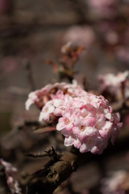 voorjaar - - - foto door fleur1208 op 25-02-2021 - deze foto bevat: boom, bloem, natuur, voorjaar