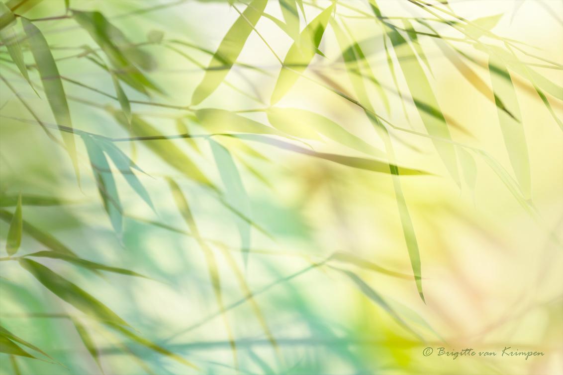 Wakai 若い 2.0 - Iedereen bedankt voor de reacties op mijn vorige upload. Op dit moment druk druk dus ik mis af en toe wat van jullie mooie foto's, excuus daarvoor  - foto door Puck101259 op 17-10-2019 - deze foto bevat: groen, abstract, licht, bewerking, photoshop, creatief, japans, brigitte, meervoudige belichting, multiple exposure