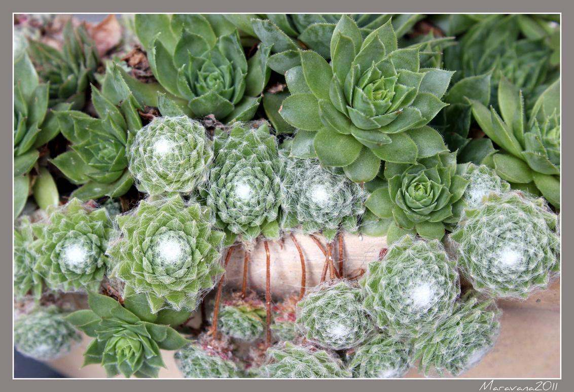 Look... - Gewoon een plantje...ben nog aan het oefenen. - foto door maravana op 08-10-2011 - deze foto bevat: plantje