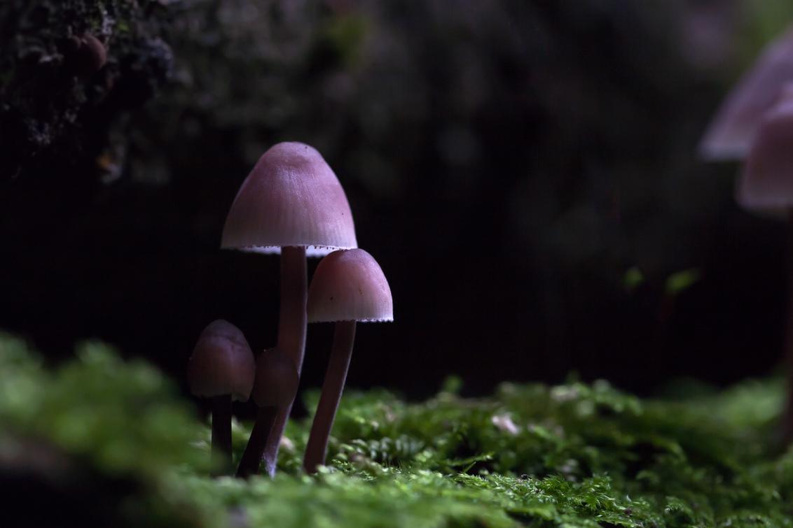 dirkclaeys-5 - the amazing gnome land - foto door dickyclaeys op 14-09-2018 - deze foto bevat: macro, paddestoel, bos