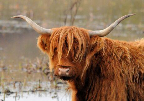 Schots-Gaelisch