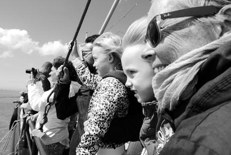 Zeehonden kijken - Zeeland