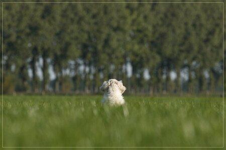 de wijde wereld - Hoi allemaal  Hier zit Bogyi de wijde wereld in te kijken tijdens zijn eerste uitstapje. Wisten we maar wat er in zo'n bolletje om ging op zo'n mo - foto door Evert61 op 30-11-2009 - deze foto bevat: natuur, dieren, hond, honden, golden, retriever, pup, puppie, goldenretriever