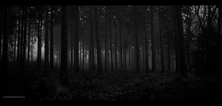 Avondval - Een experiment. Met weinig licht uit de hand nog een plaatje proberen te schieten in het bos. Hoge ISO, lage sluitertijd en heel stil blijven staan. - foto door motionman op 14-12-2020 - deze foto bevat: donker, test, natuur, licht, hoog, avond, landschap, bos, experiment, bomen, silhouet, horror, nacht, film, zwartwit, sfeer, korrel, eng, iso, hoge, weinig, sfeervol, korrelig, scene, oranjewoud, macabre, nachtval, scenisch