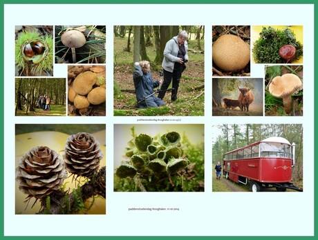 paddenstoelendag Hooghalen 11-10-'14 (2).jpg