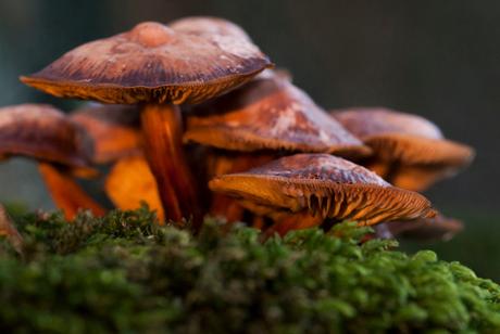 Sunset Mushroom