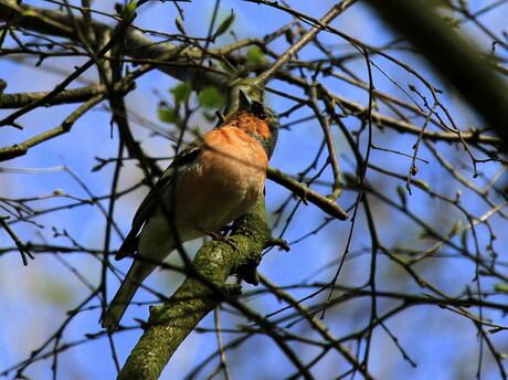Elke vogel zingt zijn lied.