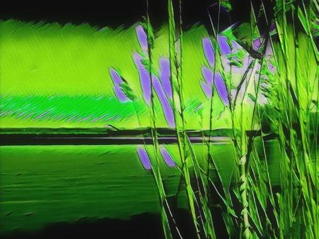 Riet-veld - - - foto door Gooiseroos op 06-04-2020 - deze foto bevat: groen, paars, abstract, natuur, bewerkt, fantasie, kunst, bewerking, sfeer, contrast, creatief, textuur, rietveld, manipulatie, bewerkingsuitdaging