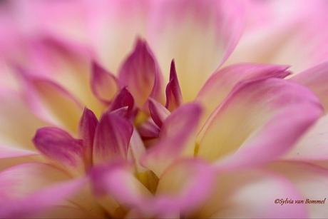 romantisch roze