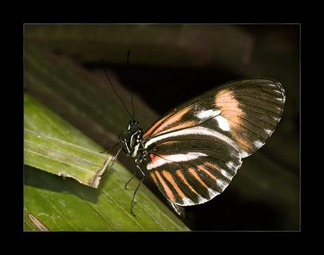 Vlindertuin No 4