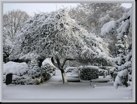 bijzondere boom op speciale plek
