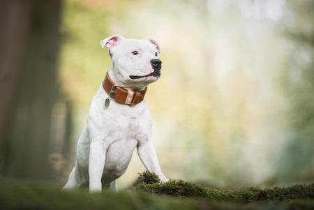 Doxx - Doxx in het bos. - foto door HannahV op 09-11-2018 - deze foto bevat: groen, natuur, portret, huisdier, bos, hond