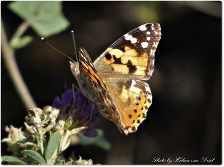 vlinder in de zon