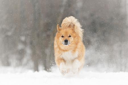 Actie in de sneeuw - Bryja geniet met een grote G van de sneeuw! - foto door MarleenVerheulFotografie op 10-02-2021 - deze foto bevat: dieren, huisdier, hond, hondenfotografie, hondenfotograaf