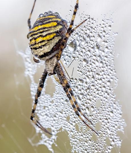 Spin in web met druppels