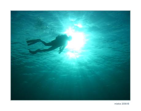 Silhouet duiker