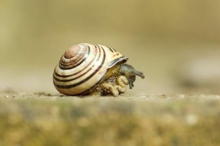 """""""Transform and roll out!"""" - Omzetting van de veilige omgeving naar mobiliteit - foto door Rolo72 op 14-04-2021 - deze foto bevat: slak, macro, tuin, slak, natuurlijk landschap, hout, terrestrische dieren, shell, slakken en naaktslakken, weekdieren, macrofotografie, gras, ongewervelden"""