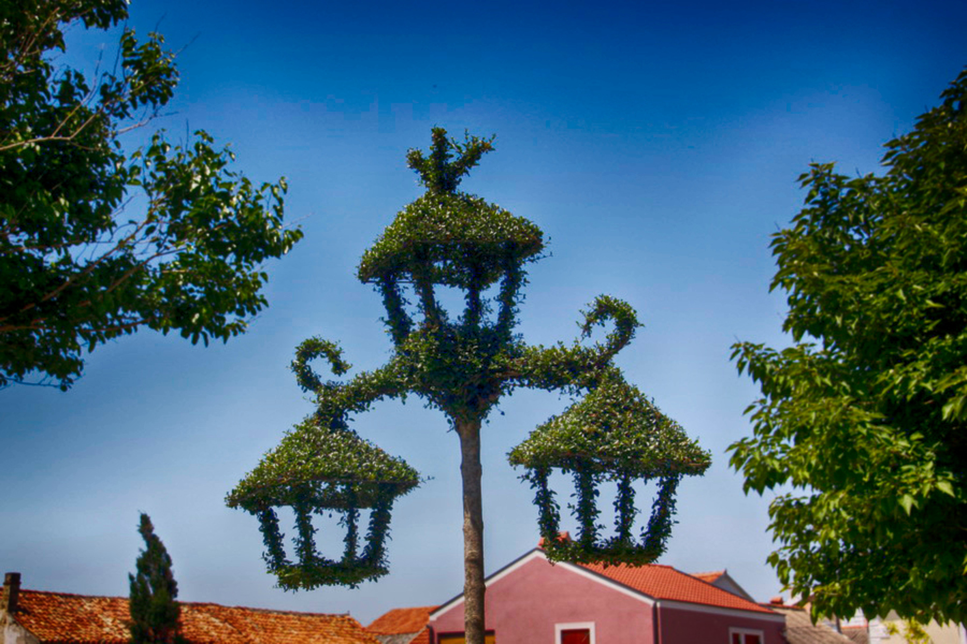 Lantaarn - Leuk grapje dacht ik. Lantaarns die begroeid lijken met een soort liguster. Dat moest van plastic zijn. Maar nee, het was een natuurlijk product, De  - foto door fotohela op 25-07-2015 - deze foto bevat: lucht, kleur, lantaarn, kroatie, reisfotografie, europa, nin, begroeid