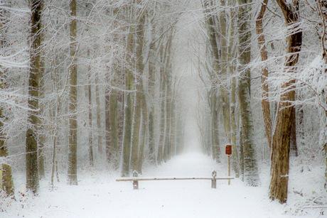 Snow !!!