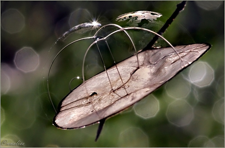 zeepbelletjes op blaadje