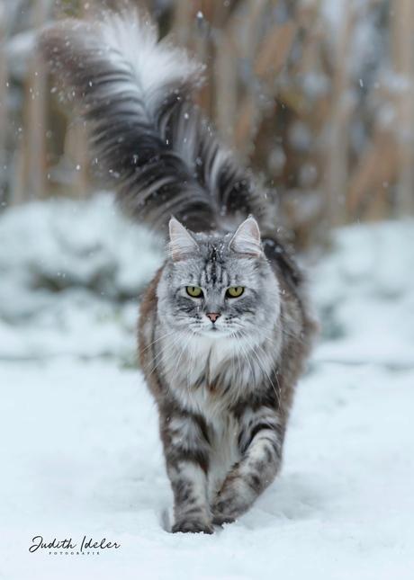Jack, de verschrikkelijke sneeuwkat