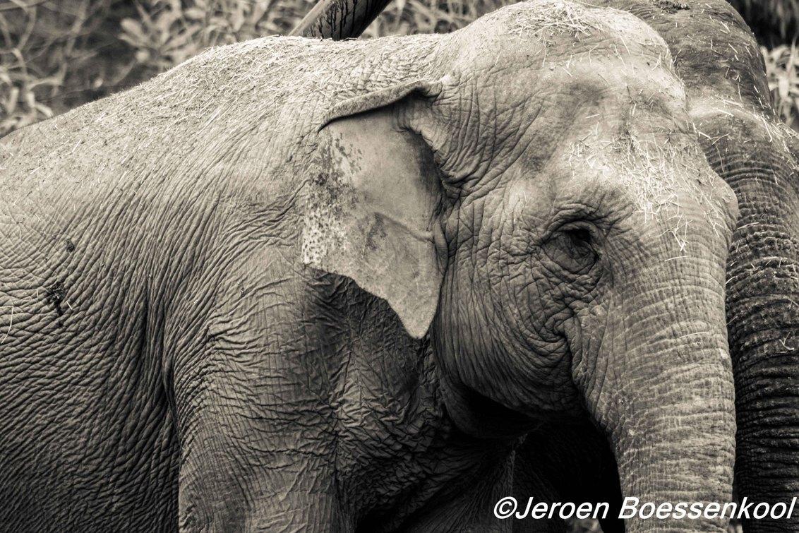 olifant - - - foto door Jeroenboess op 13-04-2015 - deze foto bevat: dierentuin, olifant