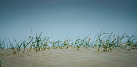 helmgras en zand