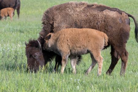 Custer State Park USA 2018 - - - foto door monicarobben op 02-07-2018