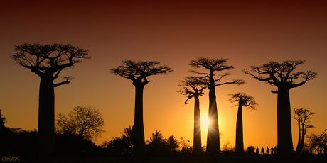 Rue du Baobab