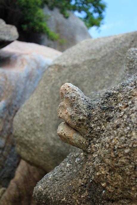 Schildpadrots