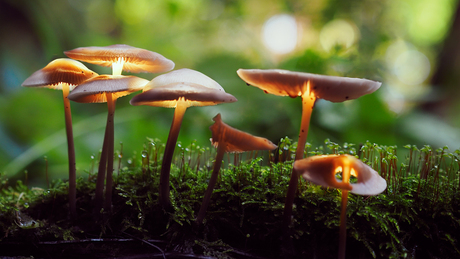 Glow Mushrooms 2